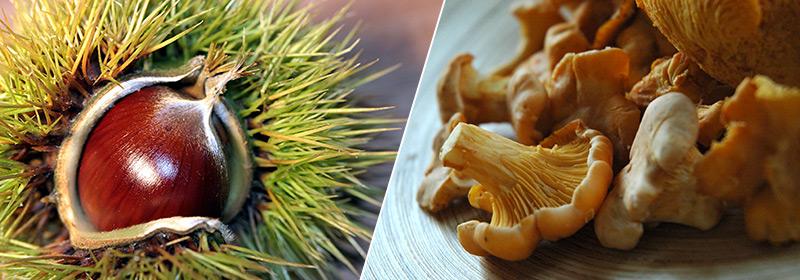 Castagne e funghi
